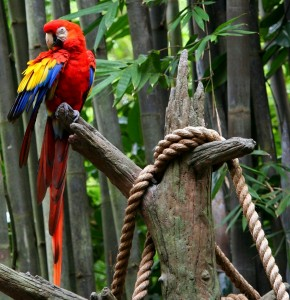red-macaw-58462_1280